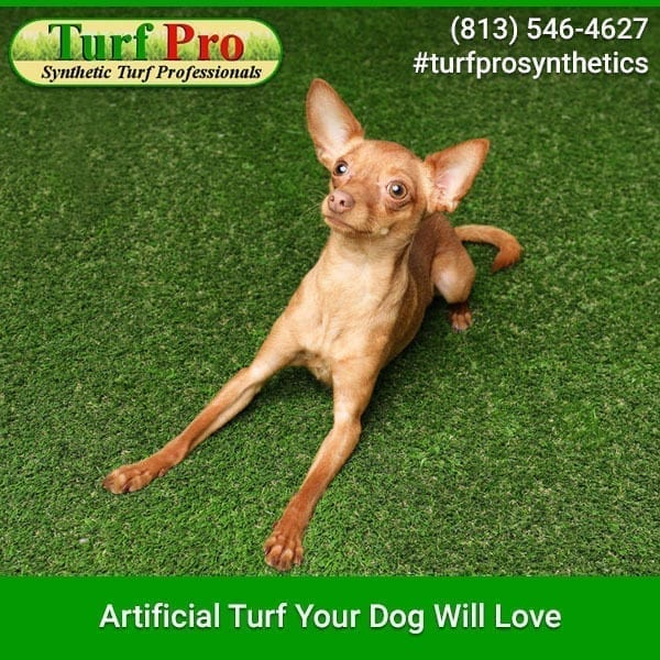 <p>Artificial turf has become quite popular in the past few years. Play areas, front yards, back yards, and landscapes are being covered with the lush grass. What is really great about it is that in hot weather, it will not need watering as real grass does. And if you are […]</p>