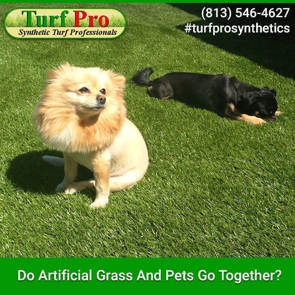 <p>Artificial turf has become very popular in the past few years. Homeowners are in love with how it makes their lawns look, how much less work there is to do on the yard and all the other amazing benefits. One question that is often asked is if artificial grass and […]</p>